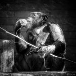The Thinker by tvurk