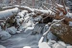 Bavarian Forest by Soffeline
