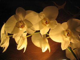 Orchids by cshell717