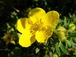 Yellow flower by Agnetis