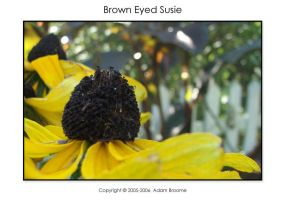 Brown Eyed Susie by Adamb22