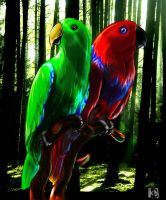 Eclectus parrot by BlueBerry-Pies