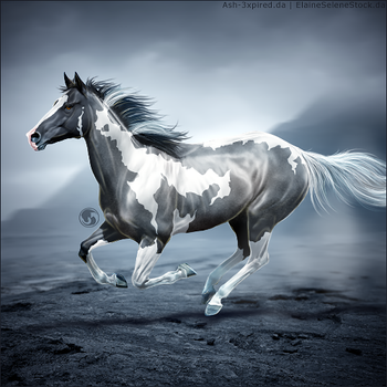 HEE Horse Avatar - Admonition by art-equine