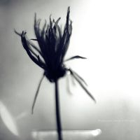 wilted. by Proseuche