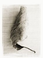 leaf series 3 by Carlosfandango