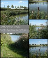 Among the reeds pack by Cat-in-the-Stock