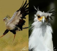 Secretary Birds Photo Studies by LindseyWArt