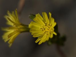 Yellow Sisters0357 by osam-devet