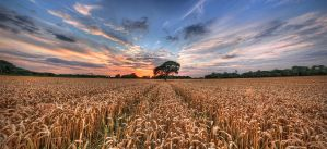 Child of the Corn by wreck-photography