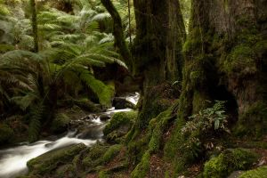 13/ 07/ 25 Cement creek 01 by Dryad-8