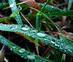 water on the leafs by hazellucy