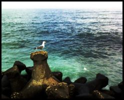 seagull by xrayfish