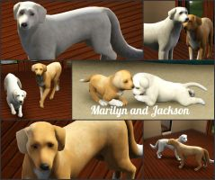 Jackson and Marilyn by modelpups