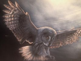 Great Grey Owl by Ebonenee