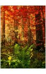 autumnal by barns