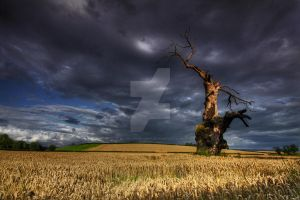 Weathered By Nature by DL-Photography