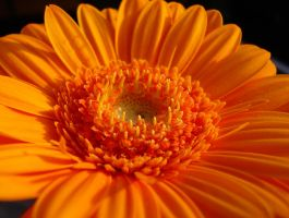 a flower for Gladys by Dieffi