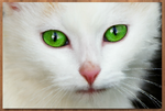 The White Cat by pawndalynn