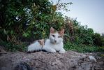 Street cat by Lonely-black-cat