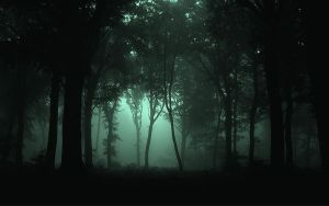 Foggy Dark Forest by Anthraxdeathrider