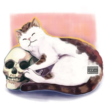 Cat and skull by staypee