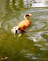 romeo swimming 2 101110 by icehippie