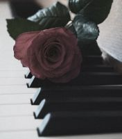 Rose-music by Safraba