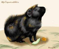 guinea pig by Asunaro