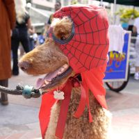 Spiderdog by makepictures
