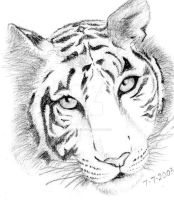 Tiger by Of-Heliotropes