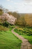 Path turning into a blooming tree by InjectedSmiles