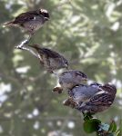 Sparrow Family by welshbeck