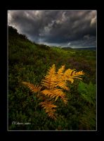 the golden one by theoden06