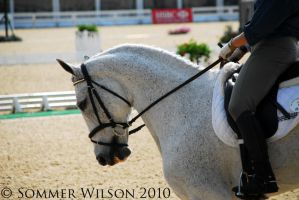 Rolex 2010 Warmup 2 by zeeplease