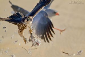 Hostile take-over by LinRuPhotography