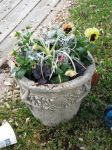 Winter Planter::00 by Talakyo