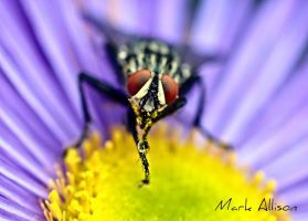Eye am looking at you! by Mark-Allison