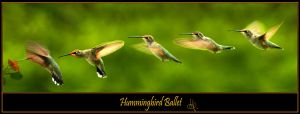 Hummingbird Ballet by Steve38