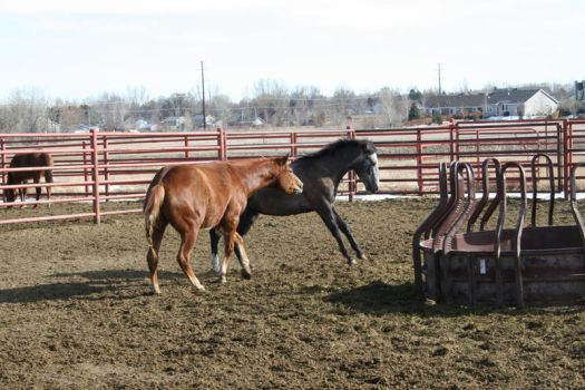Quarter horse Stock 110 by tragedyseen