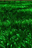 HDR Grass by Lorddarphyve