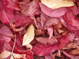 Autumn leaves_4 by MunsenTheBiscuit69