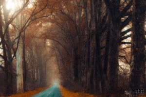 my road by ildiko-neer
