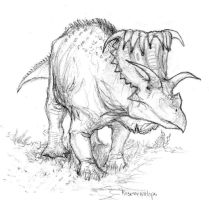 Kosmoceratops by Ashere