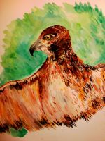 Hawk by MadCookie333