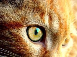 Cat Eye by ABT-Photography