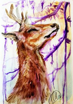 Watercolour - Young Stag by Sio64