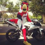 Harry the Hawk on the way to work! by mhking