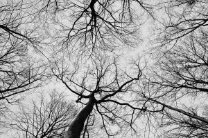 Veins in the Sky by worthdyingfor