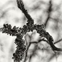 Cold Snapshots 04 by HorstSchmier