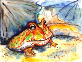 Satchmo pacman frog by Rae-chill